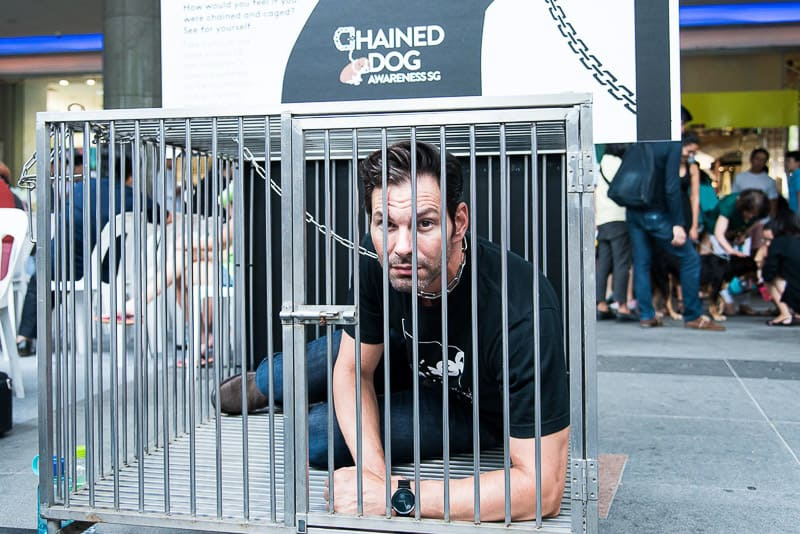 Event photography singapore chained dog awareness